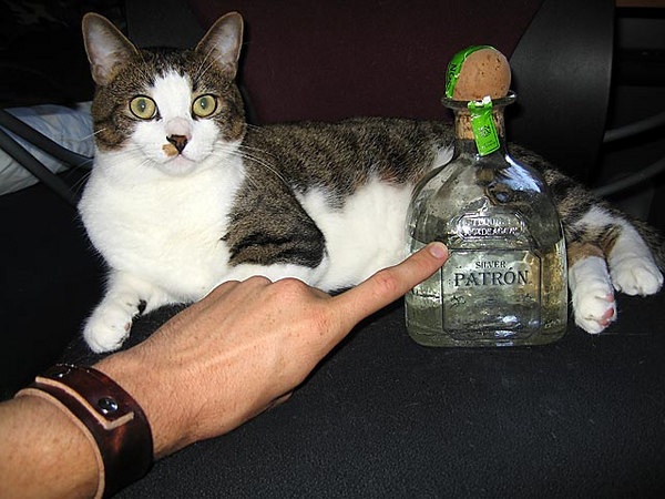 Cat and Patron