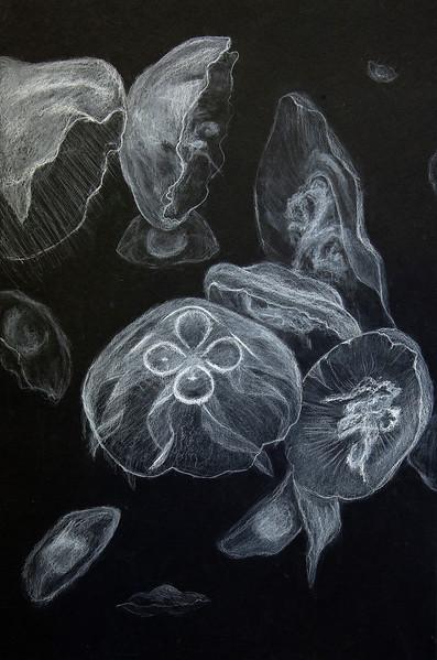 12 - Maggie Davis-Jelly Fish_AS.jpg