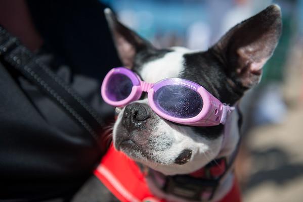 Dog Surf Contest _ Huntington Beach