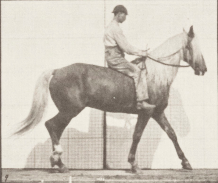 Horse Buckskin walking, lame right front foot, with rider