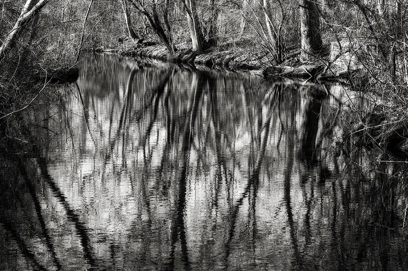 Twin Lakes Preserve