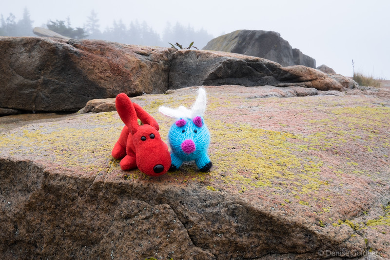 Rover and Blue, on a foggy day at the Schoodic Peninsula
