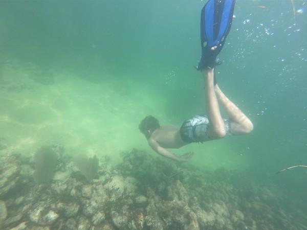Coral Reef Week 2