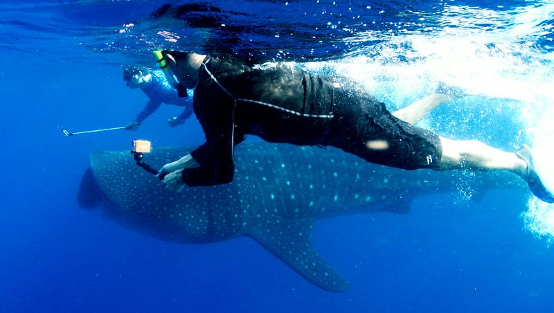 2014 Whale Shark - Cave Adventure-9.jpg
