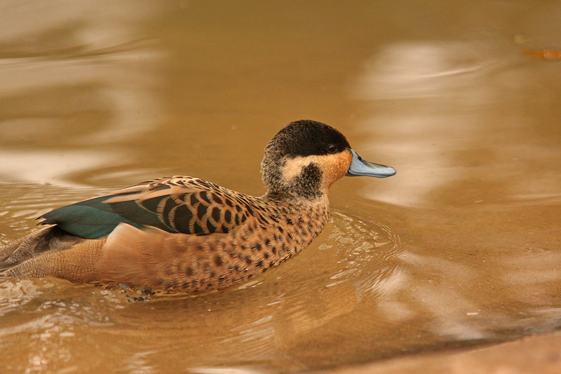 WB~Fort Worth Zooshoveler1280.jpg