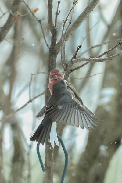 Birds-101-2.jpg