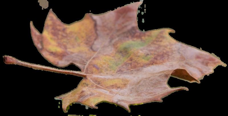 Leaf 27.png