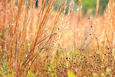 Long Key Natural Area and Treetops Park, Davie , Fla.  11/18/13