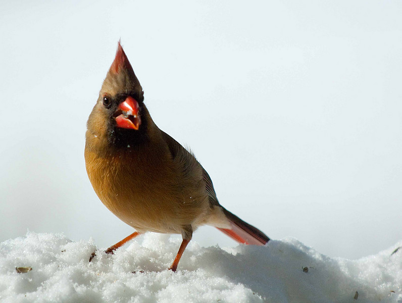 CardinalF2.jpg