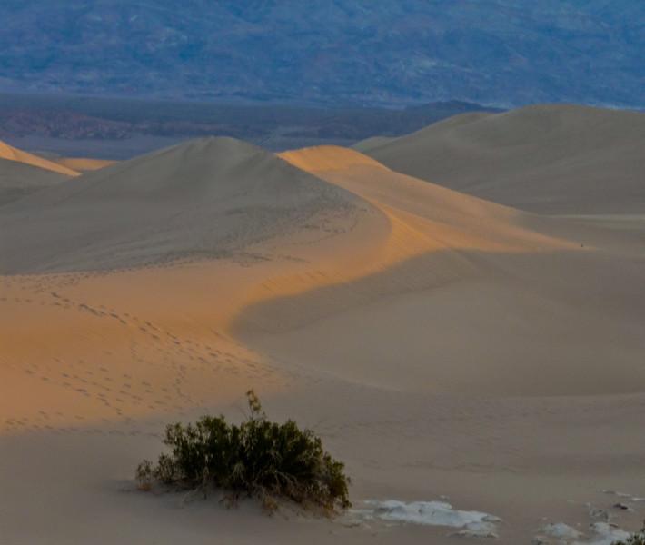 Mesquite Dunes, Sunrise