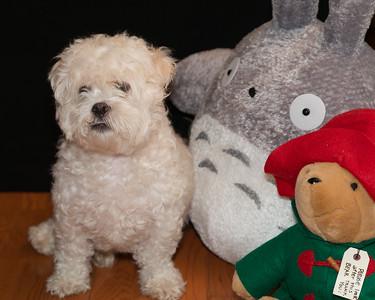 McCarthy Pets 2016