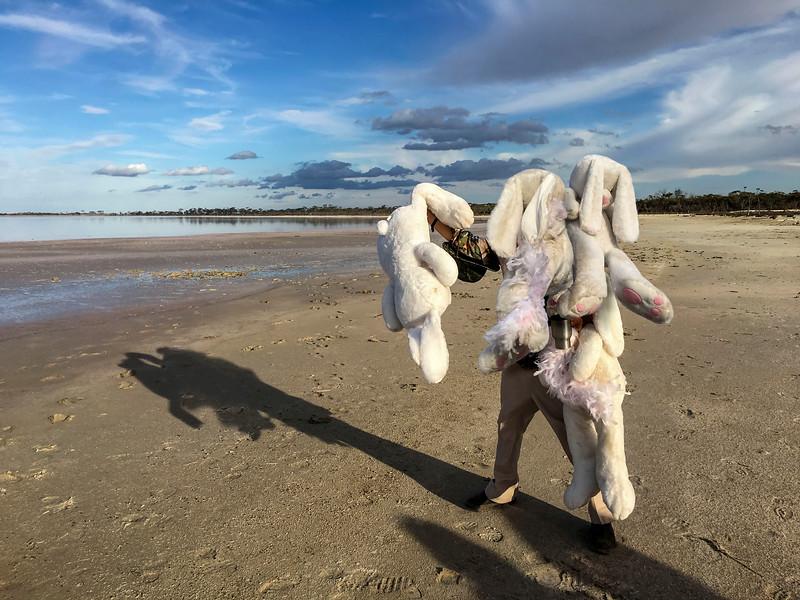 Blazing Swan 2017-Rabbits