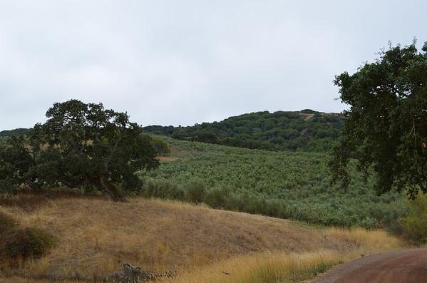 McEvoy Olive Oil tour - July 2013