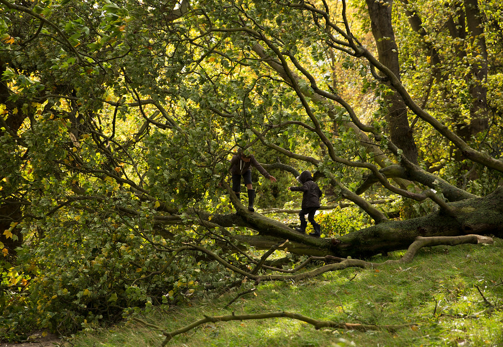 . Two brothers play on a tree that was blown over in a storm on Hampstead Heath in north London, Monday, Oct. 28, 2013.  (AP Photo/Matt Dunham)