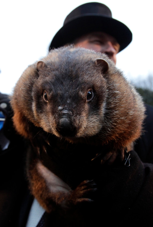 . John Griffiths, a handler of the weather-predicting groundhog Punxsutawney Phil, holds Phil after removing him from his stump at Gobbler\'s Knob on Groundhog Day, Monday, Feb. 2, 2009, in Punxsutawney, Pa. The Groundhog Club said Phil saw his shadow and predicted six more weeks of winter. (AP Photo/Carolyn Kaster)
