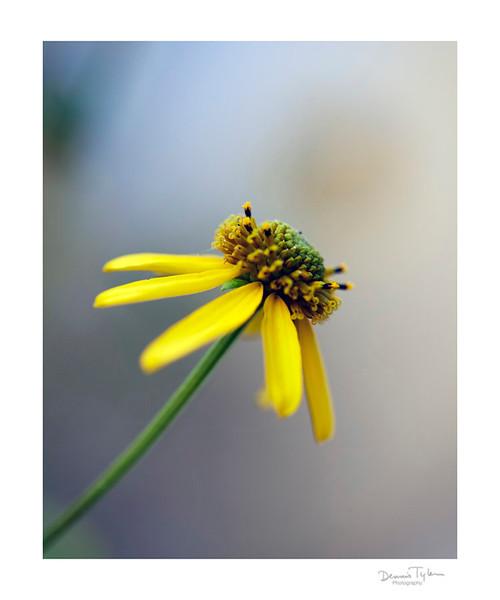 Flower_O9A6587.jpg