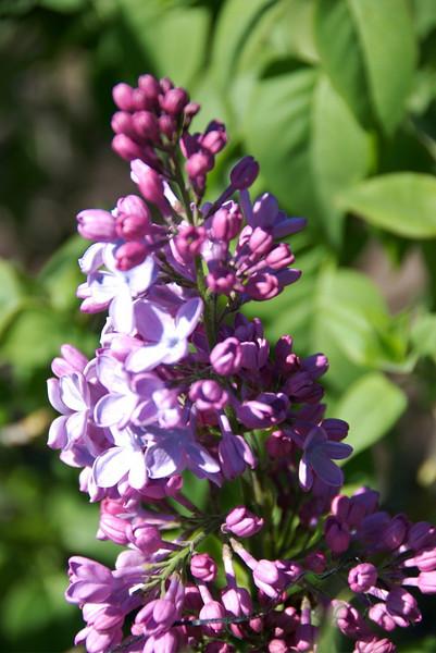 Filoli Gardens & Flowers
