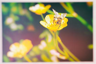 Bee after Pollen
