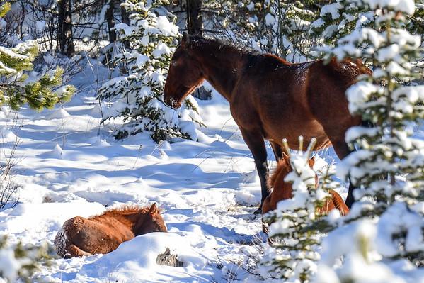 11 2012 Nov 11 Beautiful Wild Horse Herd