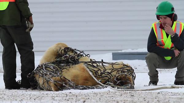 Canadian Arctic, November 4-18, 2012