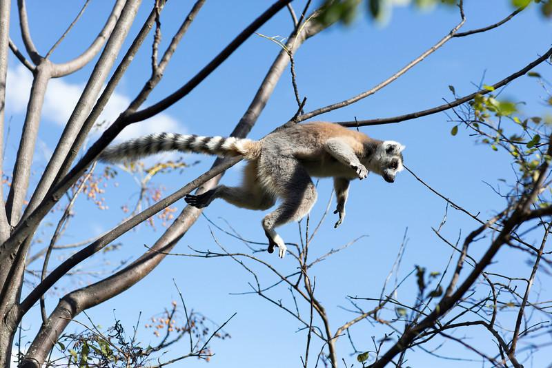 Madagascar_2013_FH0T1533.jpg
