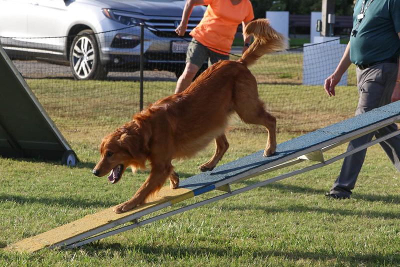 11-4-2018 Border Terrier-2476.jpg
