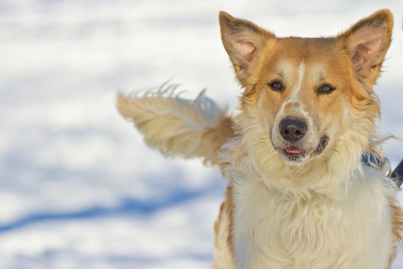 1202_Dogs_055.jpg
