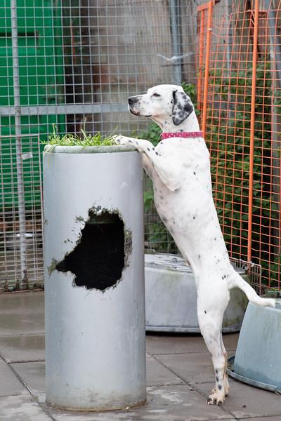 DogsAid-13.jpg