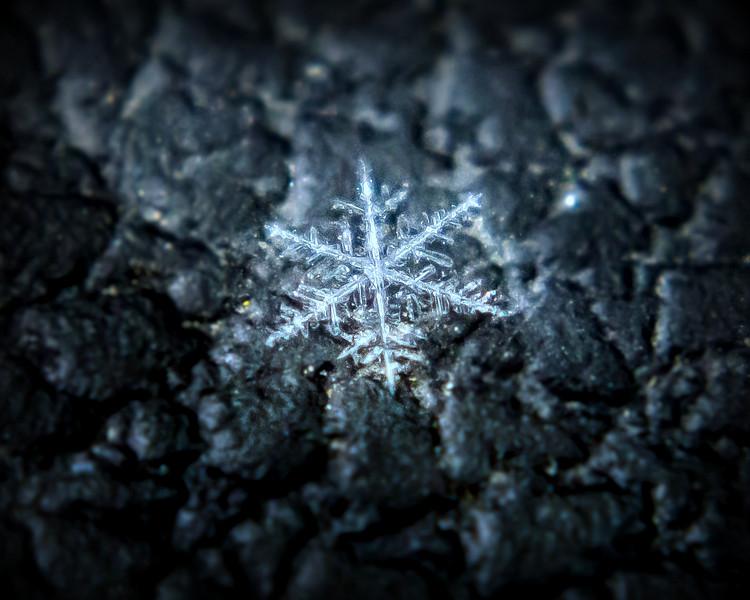 snowflake-.jpg