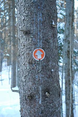 Dec 26 2017 :: Larose Forest
