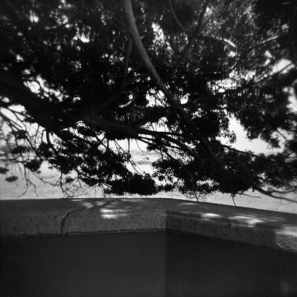 05_trees.jpg
