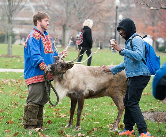 Reindeer on campus - 2015