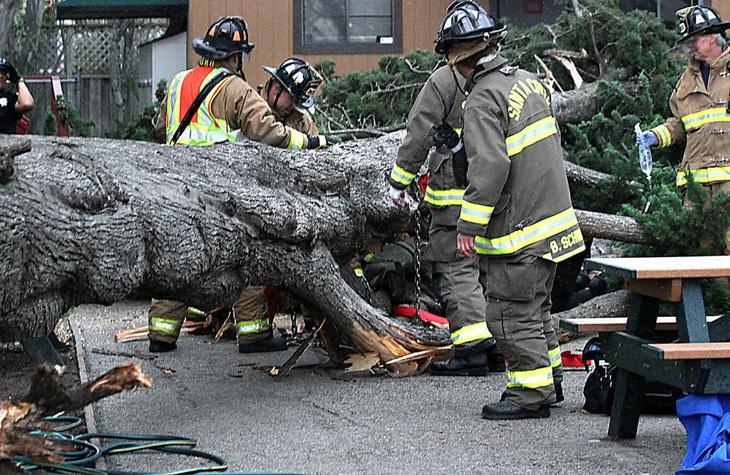 . Santa Cruz firefighters work to free a student trapped under a fallen fir tree at Gateway School Thursday morning, Dec. 11, 2014. (Shmuel Thaler -- Santa Cruz Sentinel)