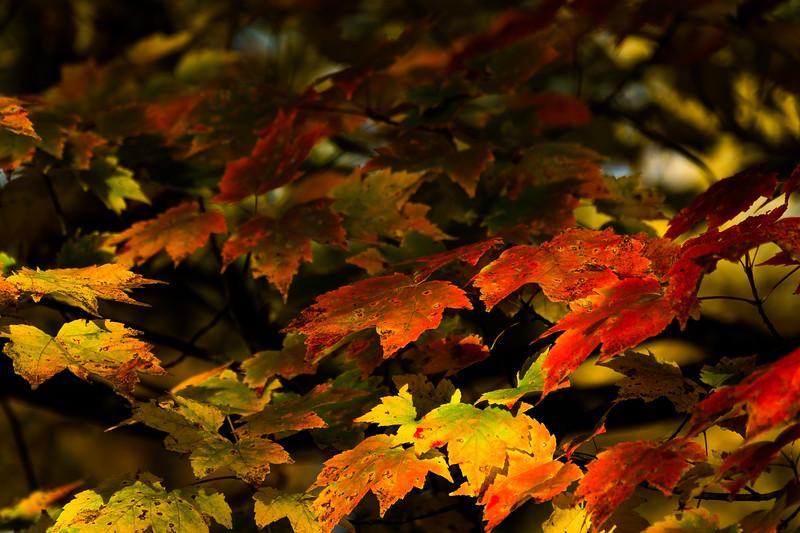 20151021 Fall Color-4478.jpg