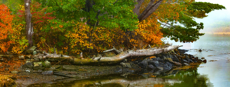 Dead Fall and Fall Colors.jpg