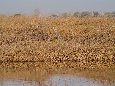 Birds in Reserves Near Los Baños