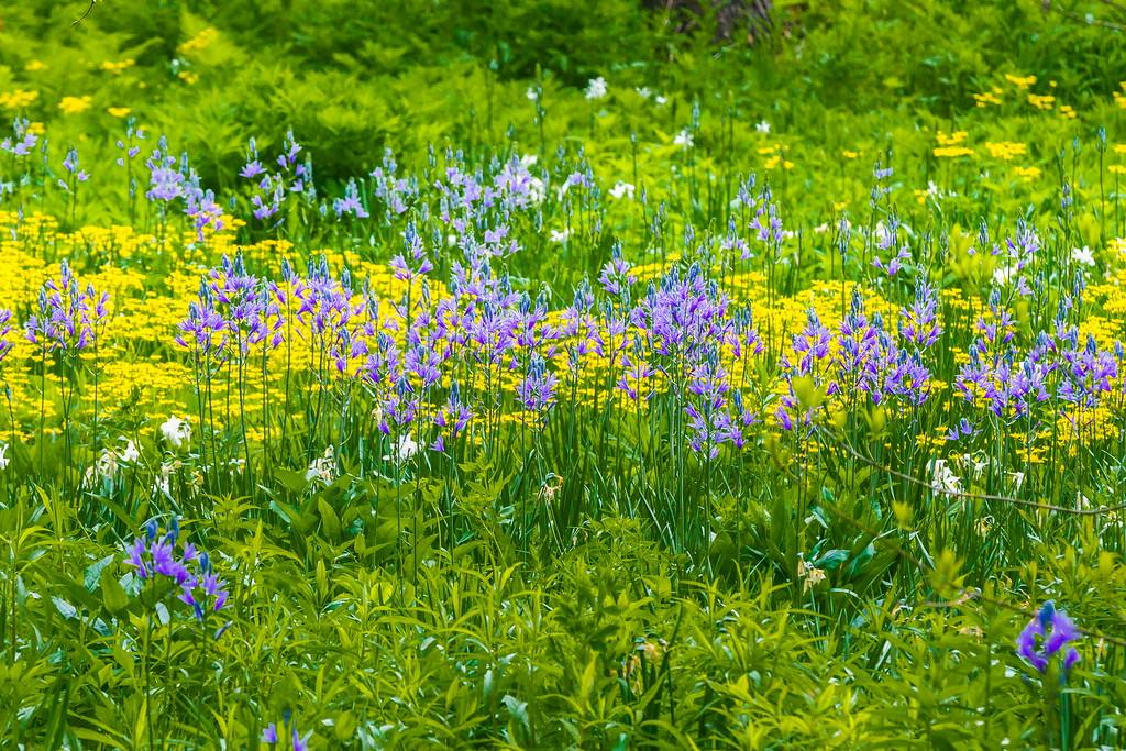 Chanticleer花园,闻着花香