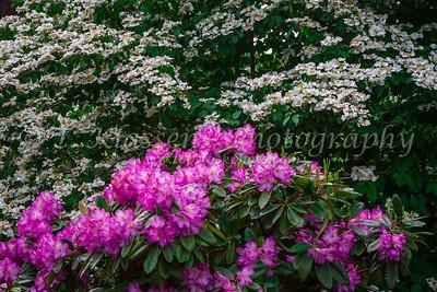 Portland, Crystal Springs Rhododendron Gardens