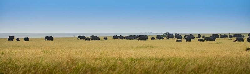 Tanzania 2013 1820.jpg