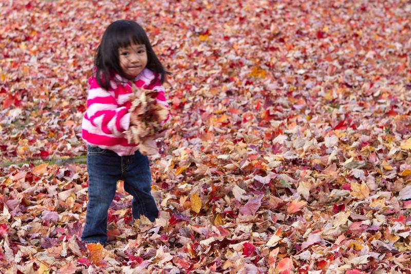 Autumn-Cleaning-2013-12.jpg