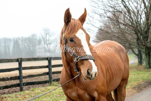 Horse #16
