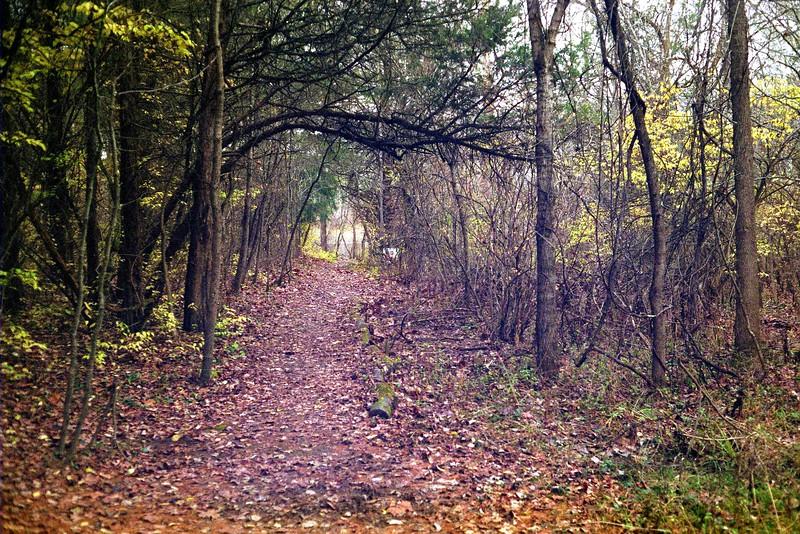 Tree Tunnel, Bachelor Preserve