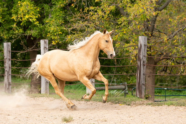 Spencer Palomino Mare