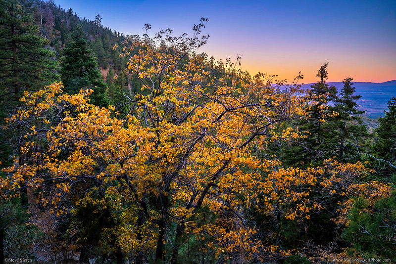 Angeles_Forest_Fall_Color_blnd_DSC3265.jpg