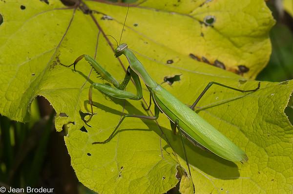 Insectes et autres  du Quebec , suite
