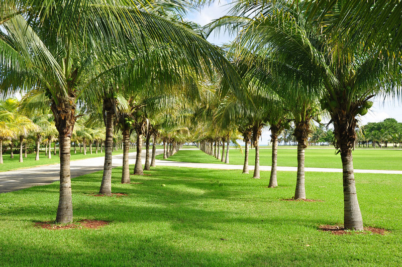 Views at Crandon Park on the island of Key Biscayne just east of Miami.