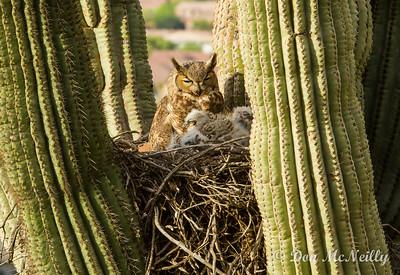 Phoenix Sonora Preserve 3-17