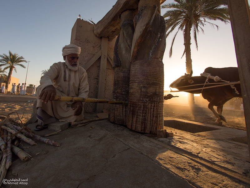 P1190279- Oman.jpg