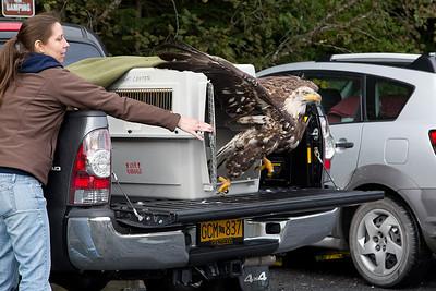 Seward Eagle Releases