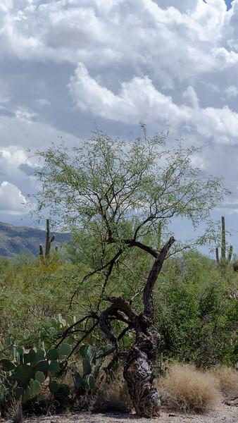 20180902-Saguaro-NP-East-4304.jpg